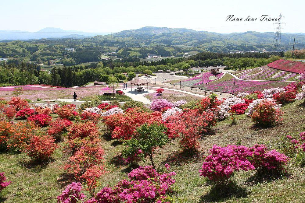 日本福島》石川郡平田村芝櫻與山杜鵑,日本賞芝櫻必去夢幻公園。