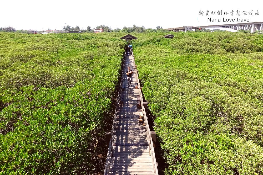 新竹新豐景點》紅樹林生態保護區。龍貓電影裡才會出現的綠色隧道場景。