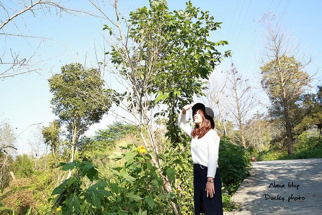 南投景點-九樹森林 (61)
