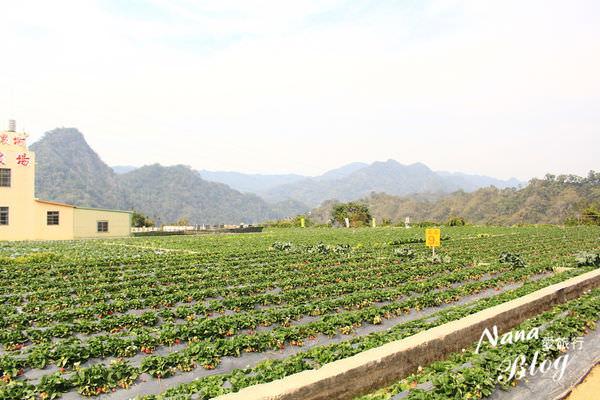 苗栗大湖草莓 (5).JPG