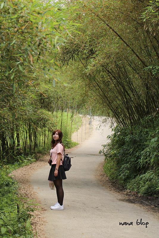 苗栗泰安-烏嘎彥竹林隧道-台灣版嵐山 (3)