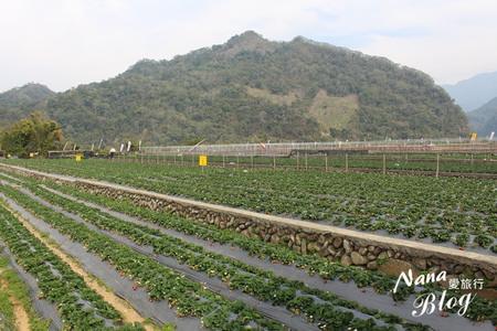 苗栗大湖草莓 (2).JPG
