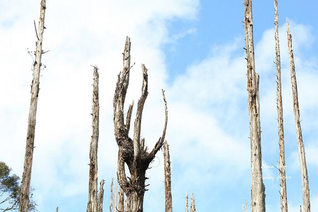 溪頭忘憂森林 (18)