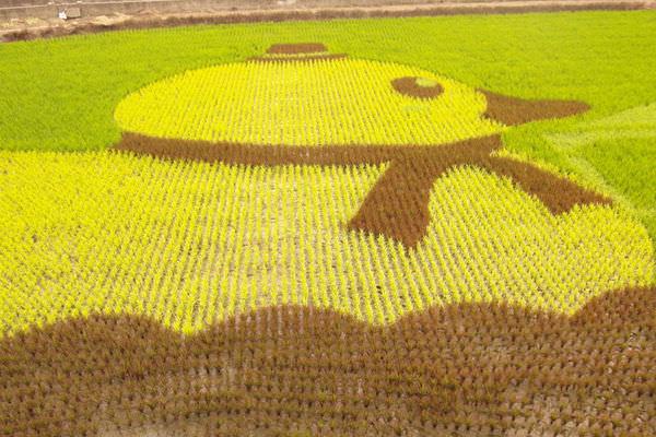 【苗栗苑裡】黃色小鴨遊回台?稻田也能變成彩繪大畫布❤藺草文化館-彩繪稻田