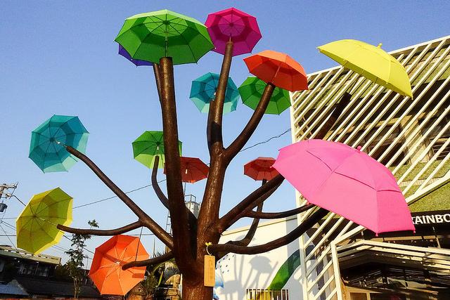 彰化和美卡里善之樹 (6)
