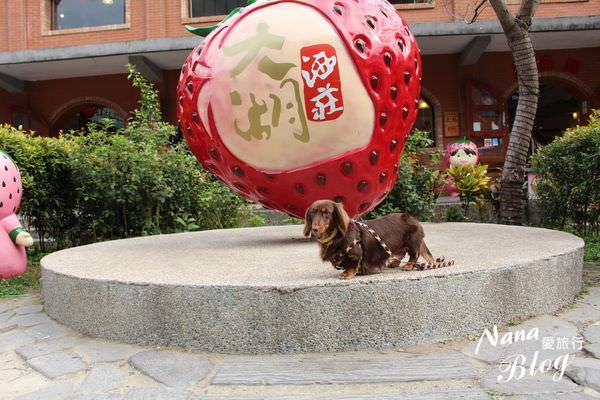 大湖草莓 (5).JPG