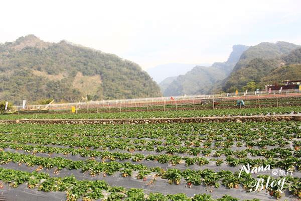大湖草莓 (10).JPG