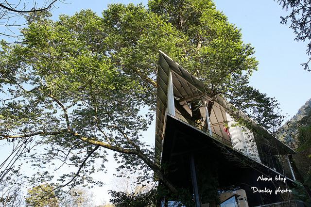 南投景點-九樹森林 (43)