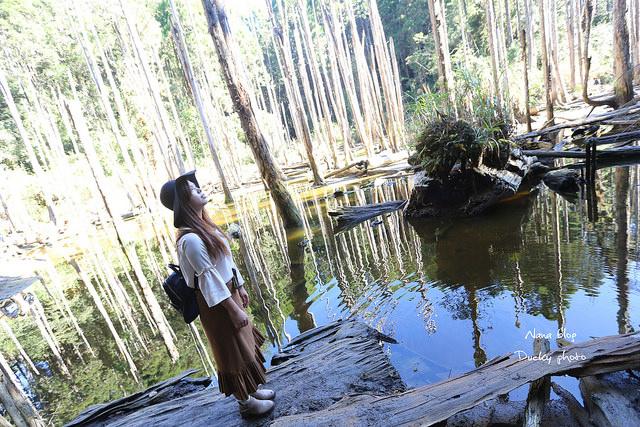 溪頭忘憂森林 (24)