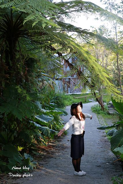 南投景點-九樹森林 (41)