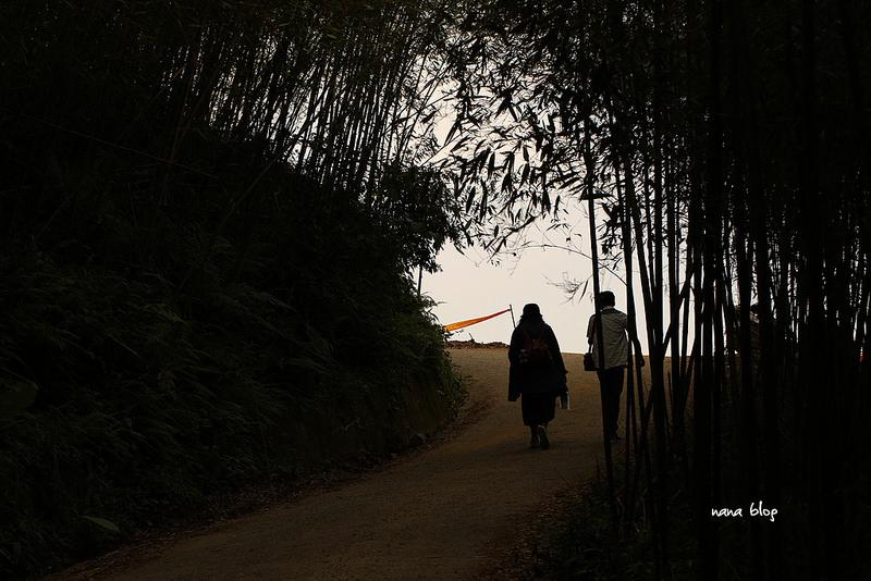 苗栗泰安-烏嘎彥竹林隧道-台灣版嵐山 (5)
