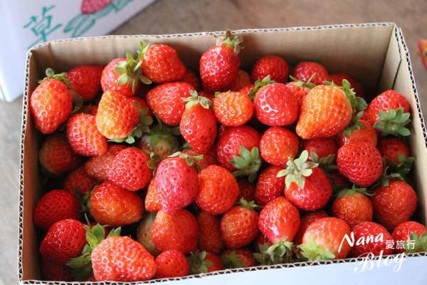 9採草莓 (1).JPG
