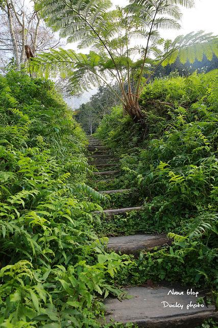 南投景點-九樹森林 (3)