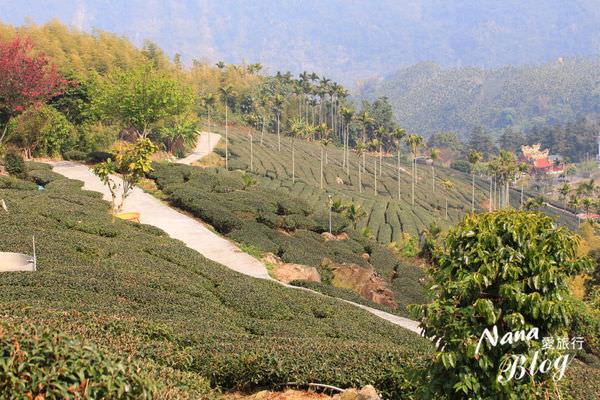 雲林古坑》樟湖村,後棟山步道。私房秘境!360度的視野遼闊茶園之美
