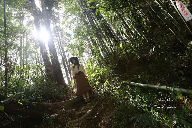 溪頭忘憂森林 (34)