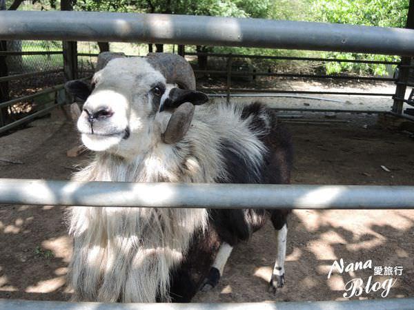 【苗栗景點。後龍】免費親子旅遊景點。帶小朋友來去看小型動物園❤台灣水牛城。苗栗後龍景點/後龍旅遊/苗栗旅遊/苗栗住宿
