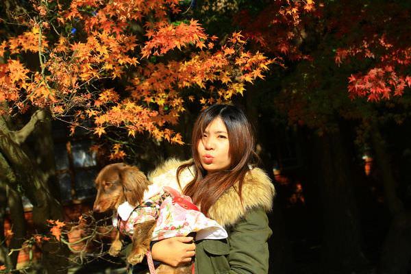 福壽山農場賞楓葉 寵物 (28).JPG