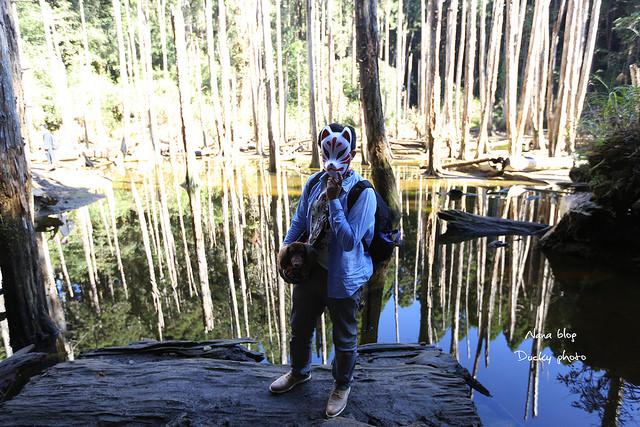 溪頭忘憂森林 (22)