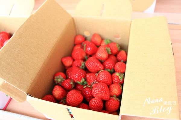 苗栗大湖草莓 (9).JPG