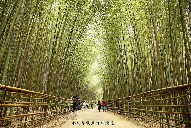 苗栗泰安》泰安烏嘎彥竹林隧道。媲美日本京都嵐山~台灣版嵐山竹林小徑